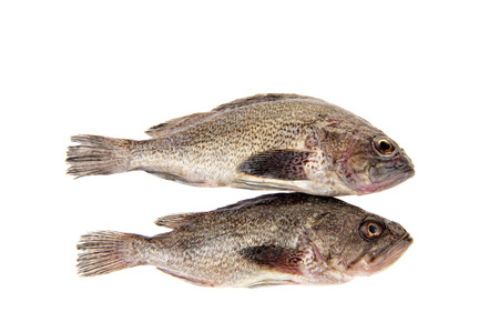 grouper: Fresh grouper in a white background Stock Photo