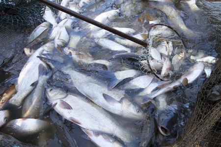 peristalsis: The fish in the fishing nets