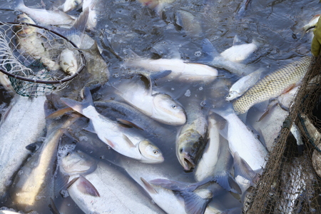 redes de pesca: Los peces en las redes de pesca de agua Foto de archivo