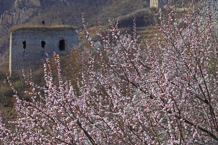 ancient pass: apricot flowers Stock Photo