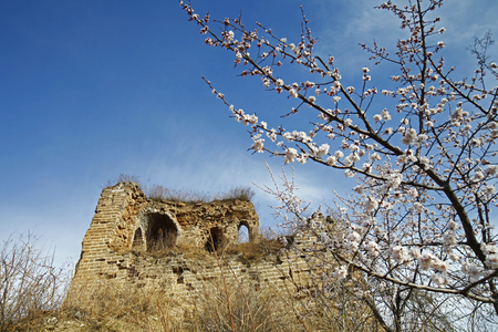 ecological wall and apricot flowers