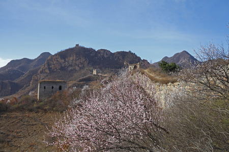 sabotage: ecological wall and apricot flowers