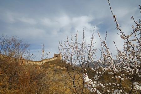 tumble down: The original ecological wall of full of apricot flowers Stock Photo
