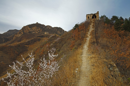 The original ecological wall of full of apricot flowers Stock Photo