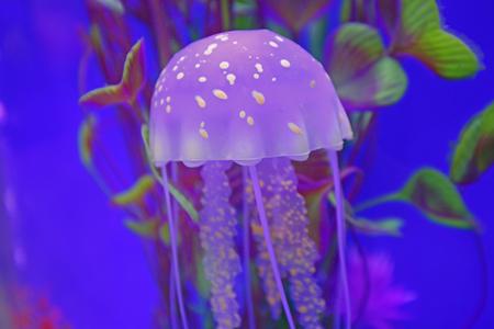 aquatic products: jellyfish Stock Photo