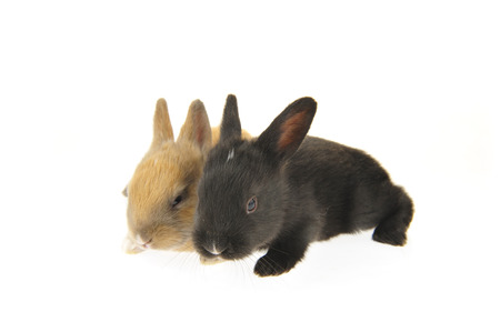 The rabbit in a white background Stock Photo