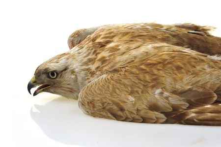 The eagle head features on a white background