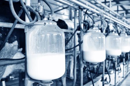 Mechanized milking equipment milking parlour
