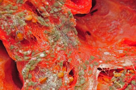 rotten: rotten watermelon
