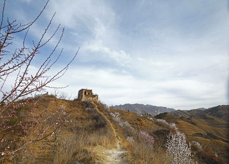 sabotage: The original ecological wall of full of apricot flowers Stock Photo