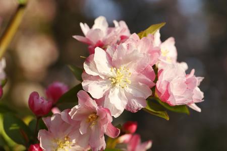 Nahaufnahme von blühenden Blume Standard-Bild - 83070718