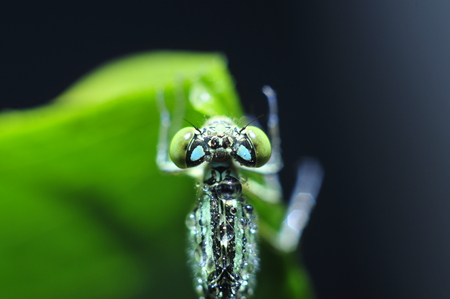 The macro features of dragonflies