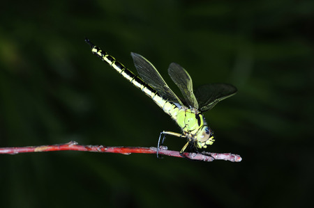 A dragonfly on the green plants