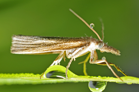 Moths with dew on the grass