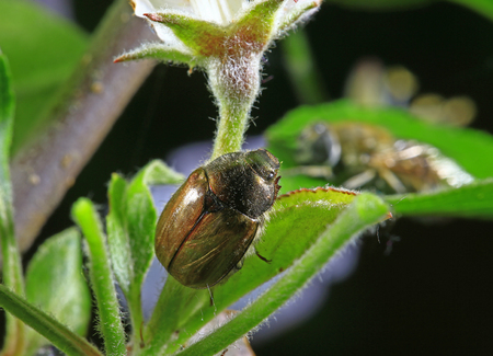 Beetle on the plant