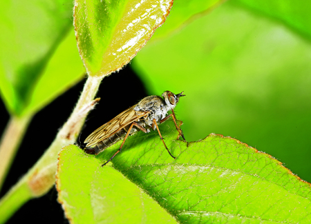 Horse-fly on the plant Stock Photo