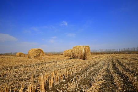 Dry straw under the blue sky Stockfoto