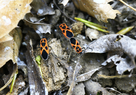 Bug families