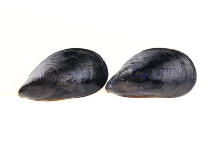 Mussels with white background