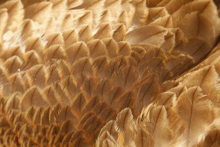 Eagle feathers