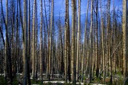 Yellowstone, WY Banco de Imagens