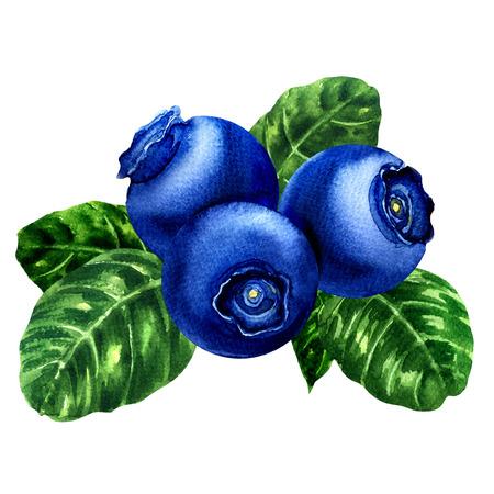 ブルーベリー、葉し、果実を白い背景の分離、水彩画の絵画