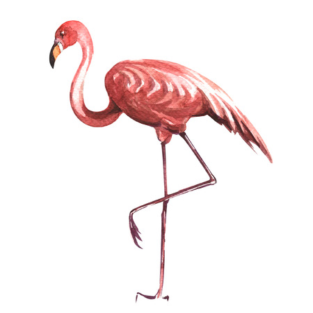 pink flamingo isolated, watercolor painting on white background Фото со стока