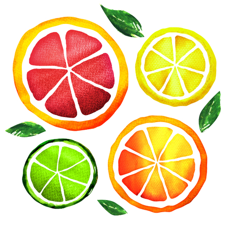 Slices of fresh citrus fruits isolated, watercolor painting on white background Stock Photo