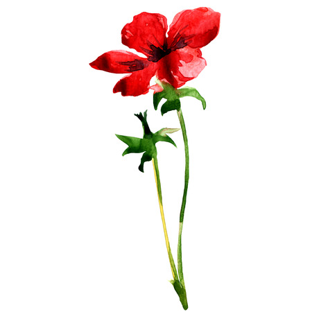 wild flower: red wild flower isolated, watercolor painting on white background Stock Photo