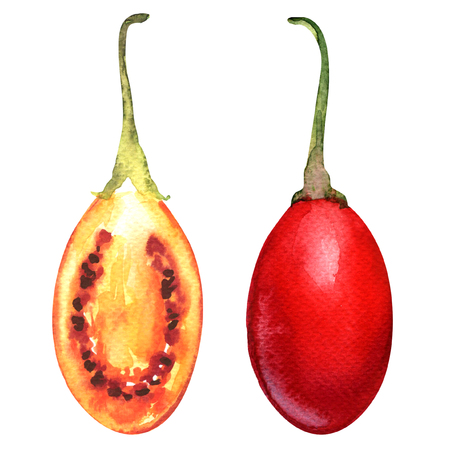 Tamarillo fruits with slice, watercolor painting on white background