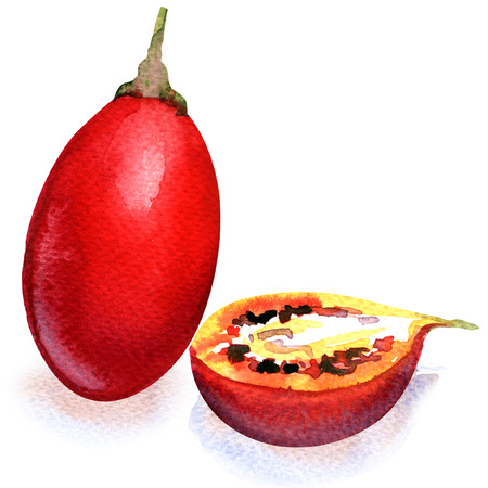 Red tamarillo fruit isolated, watercolor painting on white background