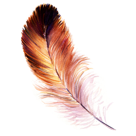 plume: Beautiful bird feather isolated, watercolor painting on white background Stock Photo