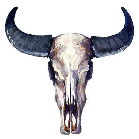 skull and bones: head skull of bull isolated, watercolor painting on white background Stock Photo