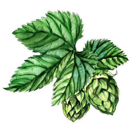 白い背景の上の葉の分離、水彩画の絵画とホップ 写真素材