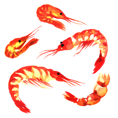 collection of shrimps, set isolatet, watercolor painting on white background