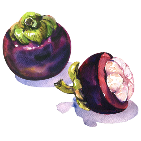 ripe mangosteen isolated, watercolor painting on white background