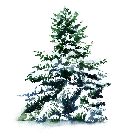 christmas tree covered snow in winter isolated watercolor painting on white background stock photo