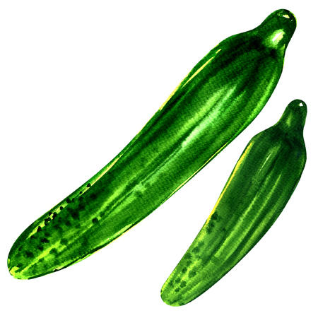 gherkin: two fresh cucumbers isolated, watercolor painting on white background