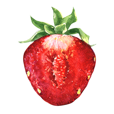 sliced: Half of strawberry isolated, watercolor painting on white background