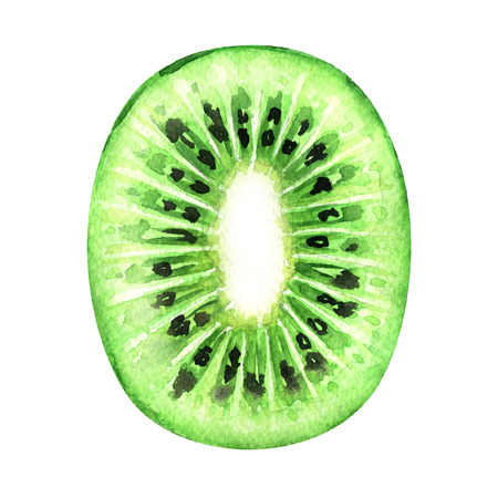 kiwi: Slice of fresh kiwi fruit isolated, watercolor painting on white background