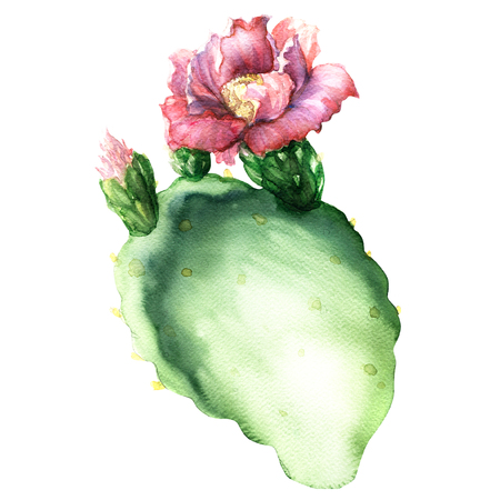 prickly fruit: Opuntia cactus with flower isolated, watercolor painting on white background Stock Photo