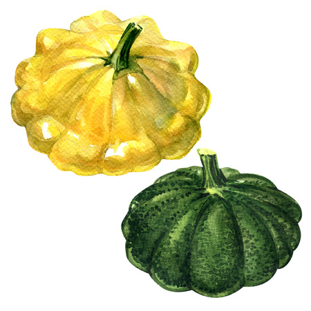patty: Yellow and green patty pan squash isolated, watercolor painting on white background