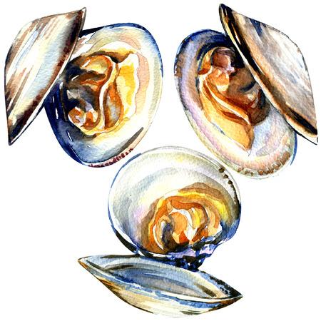 白い背景の上の開いているムール貝分離、水彩絵画のグループ 写真素材