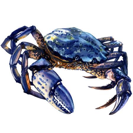 Blauwe krab geïsoleerd, waterverf het schilderen op een witte achtergrond Stockfoto