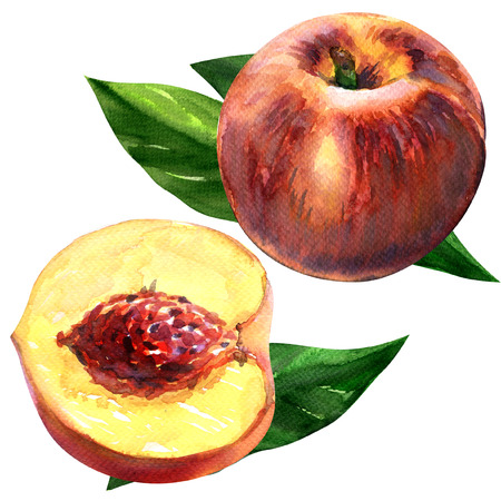 nectarine: Fresh peach. Fruits with leaves isolated, watercolor painting on white background