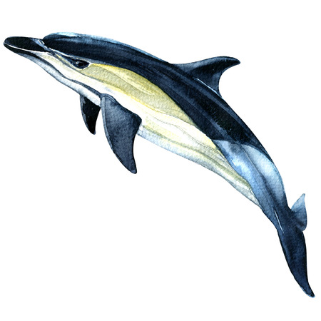 Dolphin isolated, watercolor painting on white background