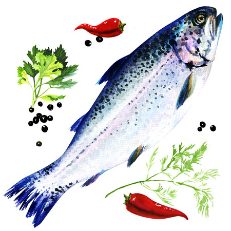 Rainbow trout with spices, watercolor painting on white background