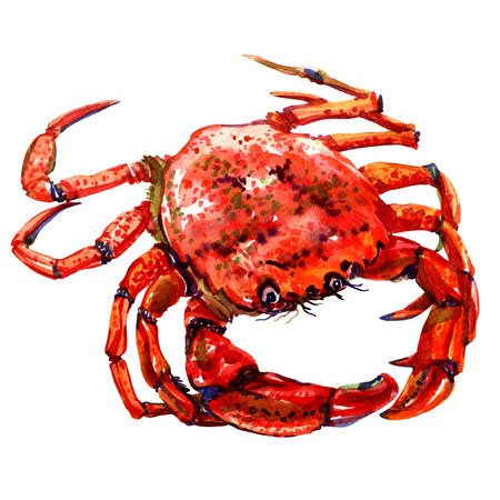 Red crab isolated, watercolor painting on white background Foto de archivo