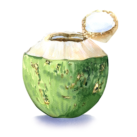 coconut water: Green coconut, water drink, watercolor painting on white background