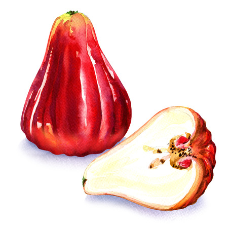 Rose apples or chomphu isolated, watercolor painting on white background